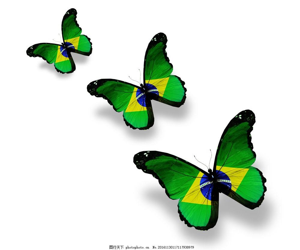 巴西国旗蝴蝶 巴西国旗蝴蝶图片素材 美丽蝴蝶 漂亮蝴蝶 昆虫动物