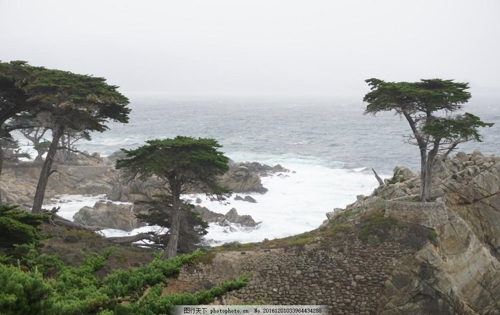 海边岩石上的松树