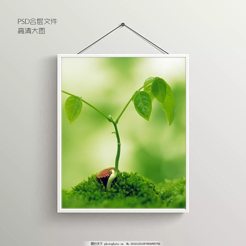 植物生长摄影无框装饰画图片 绿色图片 发芽图片 抽象背景图图片 室内背景图图片 玄关图片