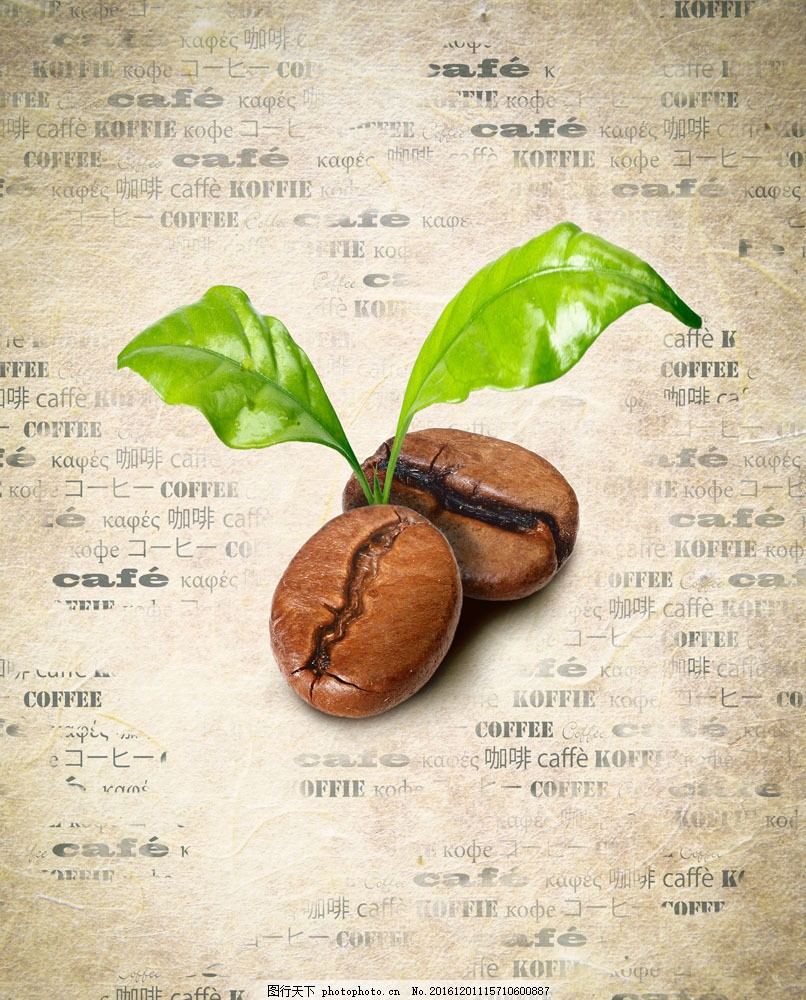 发芽的咖啡豆 发芽的咖啡豆图片素材 咖啡豆的叶子 咖啡豆植物 绿叶