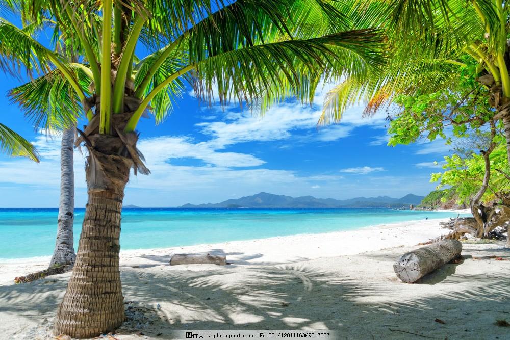 美丽沙滩上的椰树 美丽沙滩上的椰树图片素材 热带海滩 沙滩风景