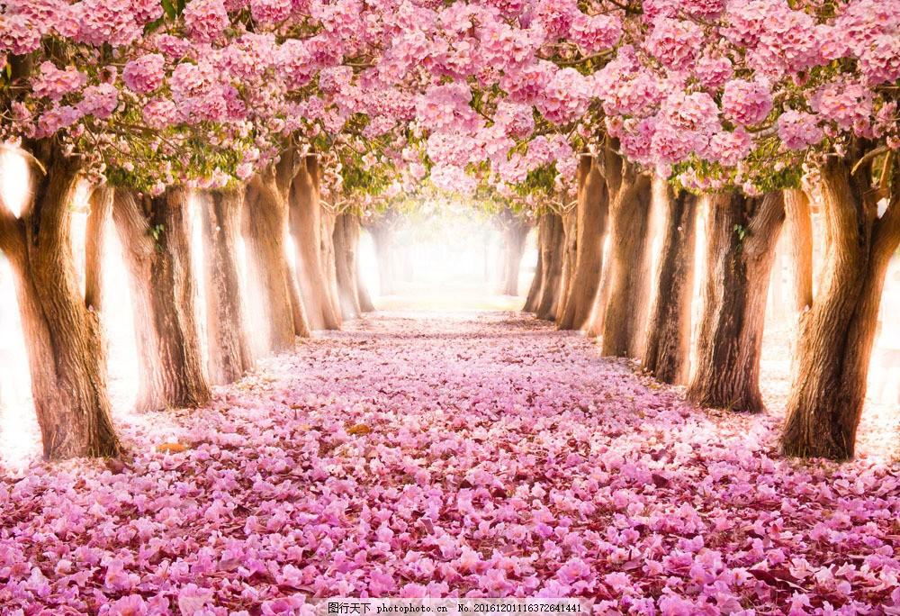 大树鲜花背景图片素材 大树 鲜花 道路 浪漫背景 植物 山水风景 风景