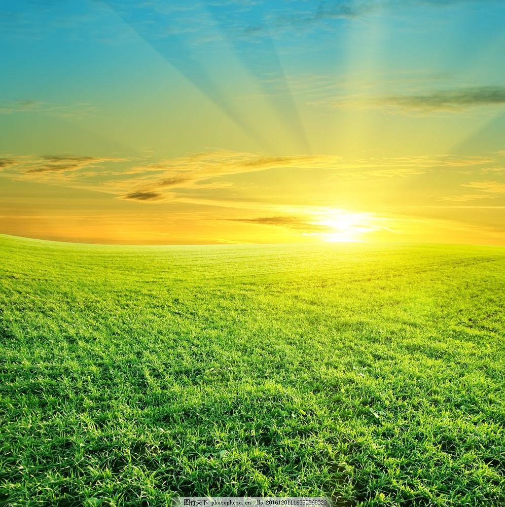绿草地阳光风景图片图片