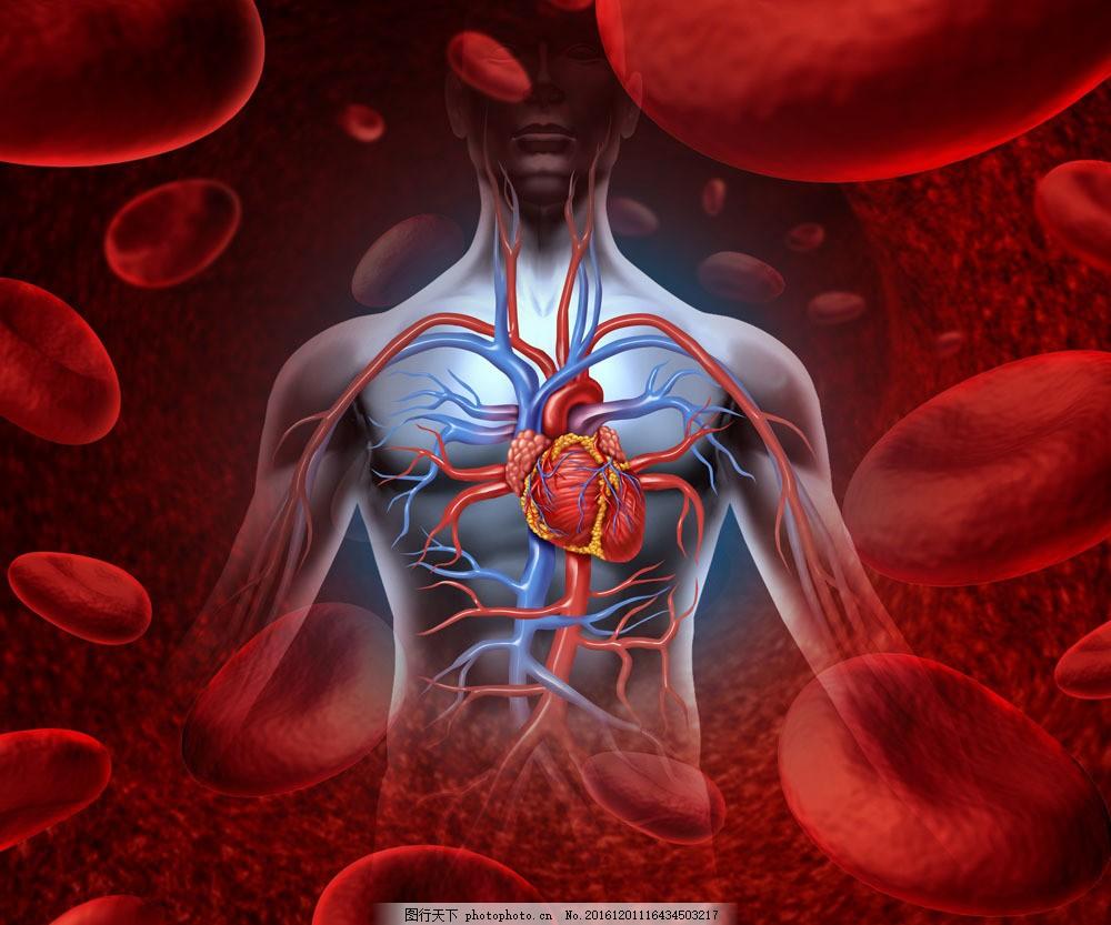 人体心脏模拟图图片