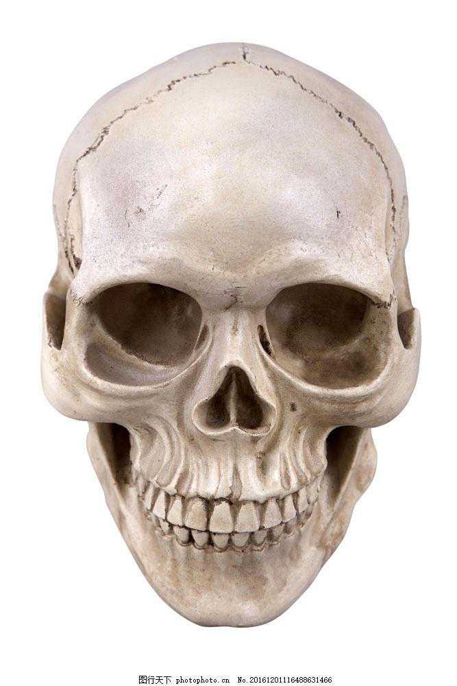 骷髅头部结构图片