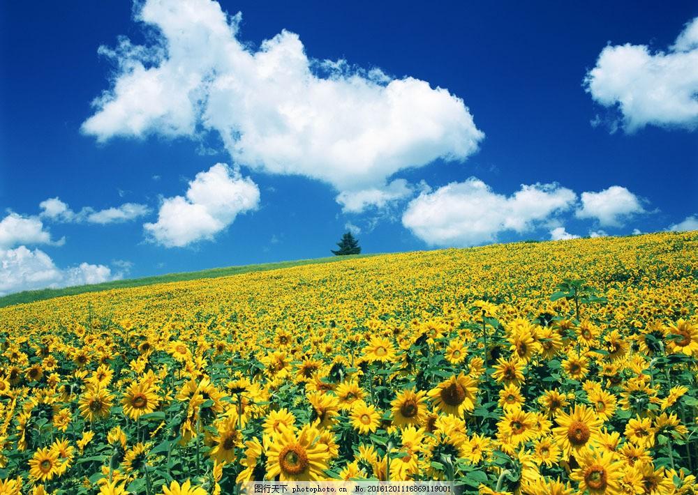 盛开 开放 鲜艳 野花群 花的海洋 花卉 风景 野花 花海 自然风景 植物