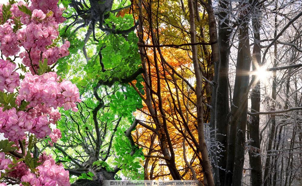 四季风景图片素材 花草四季风景 春天鲜花 夏天树叶 秋天树木 冬天