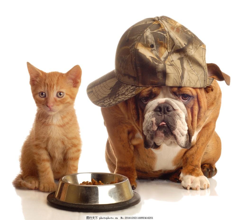 小动物 宠物 小猫咪 小狗 狗狗 名狗 食物 狗粮 前卫 帽子 小狗戴帽子