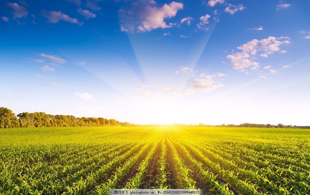 秦皇岛农田 唯美 风景 风光 旅行 自然 麦田 田野 农业观光园