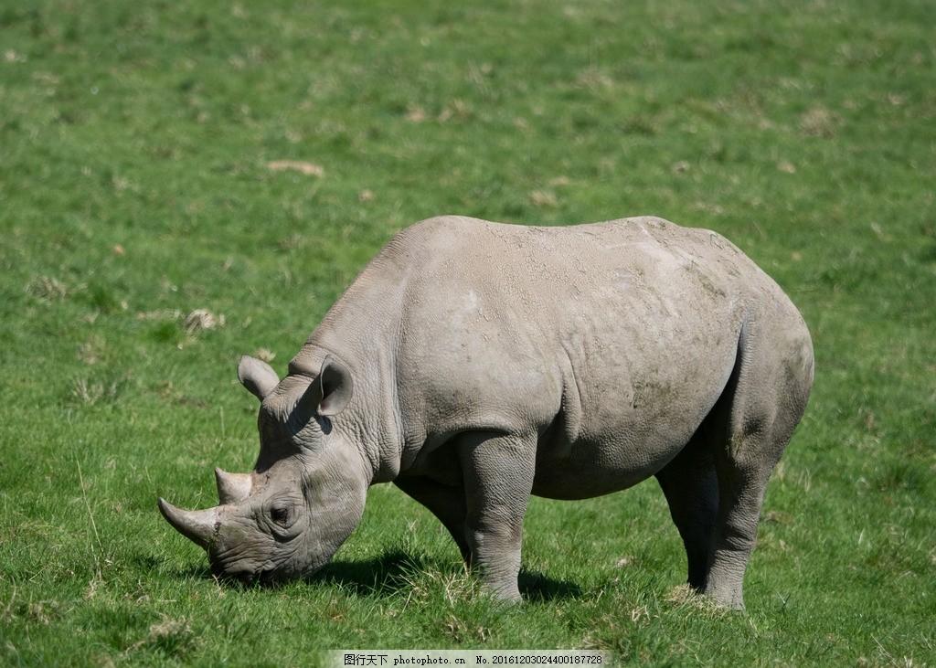 犀牛 野生 生物 保护 动物