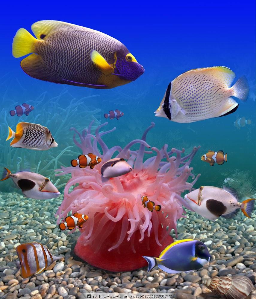 海底海鱼和石头 海底海鱼和石头图片素材 珊瑚 海底鱼类动物 海底世界
