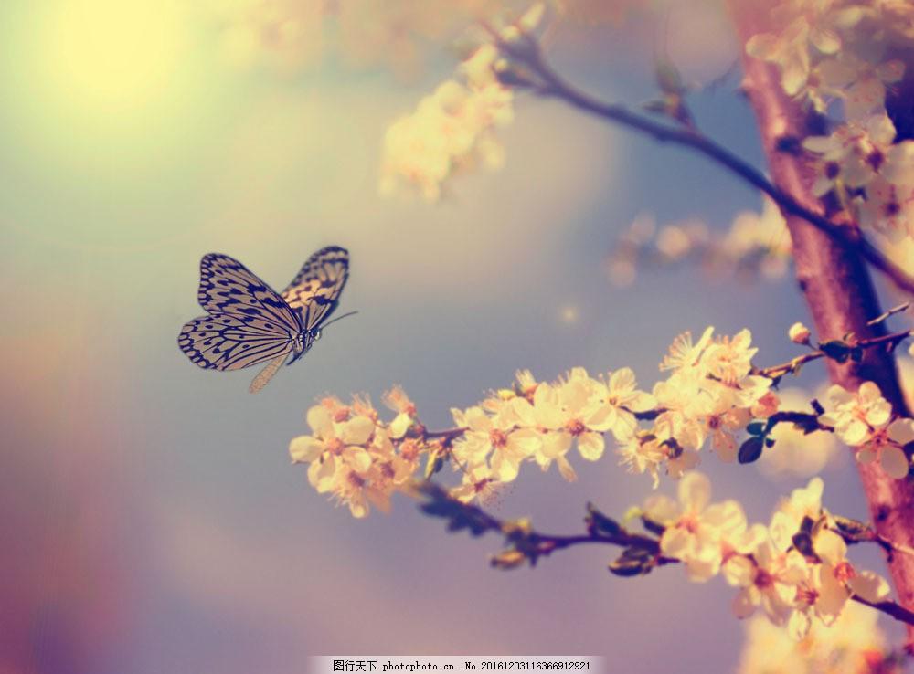 梦幻背景 蝴蝶 飞舞 花朵 植物 花卉 鲜花 山水风景 风景图片 图片