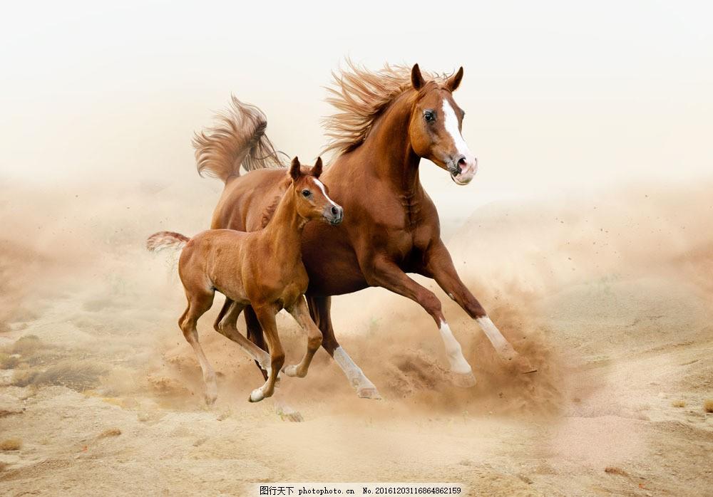 正在奔跑的大马与小马 正在奔跑的大马与小马图片素材 幼崽 动物