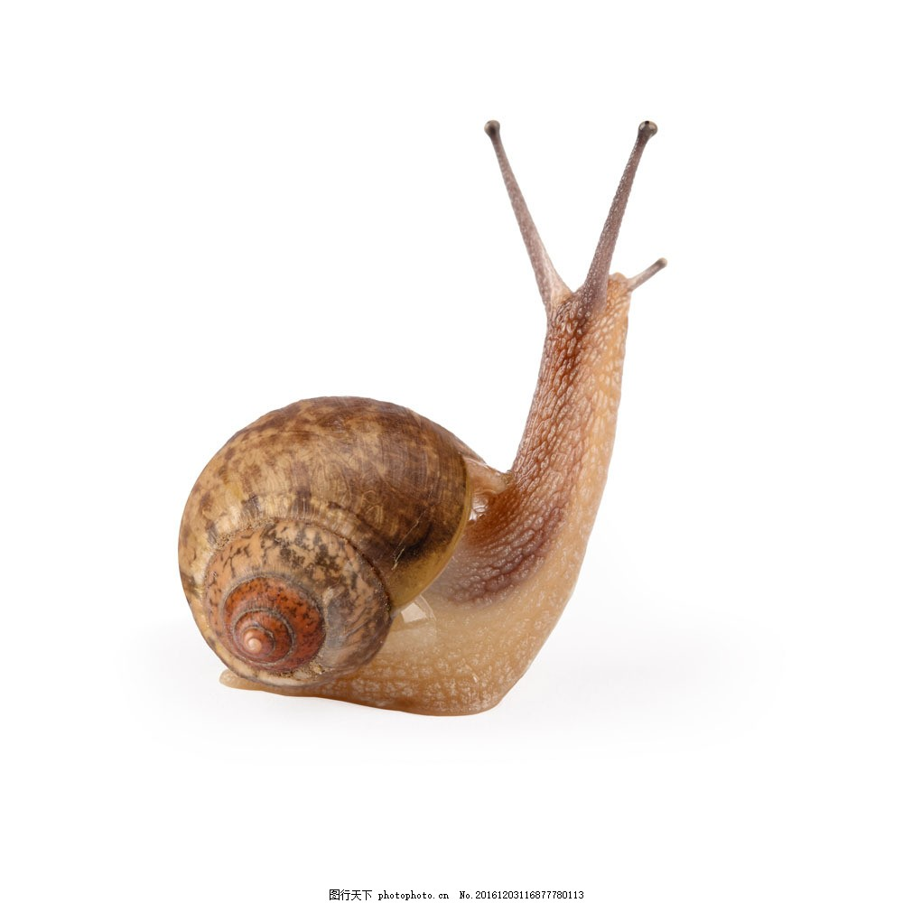 蜗牛摄影 蜗牛摄影图片素材 爬行动物 可爱动物 动物世界 陆地动物