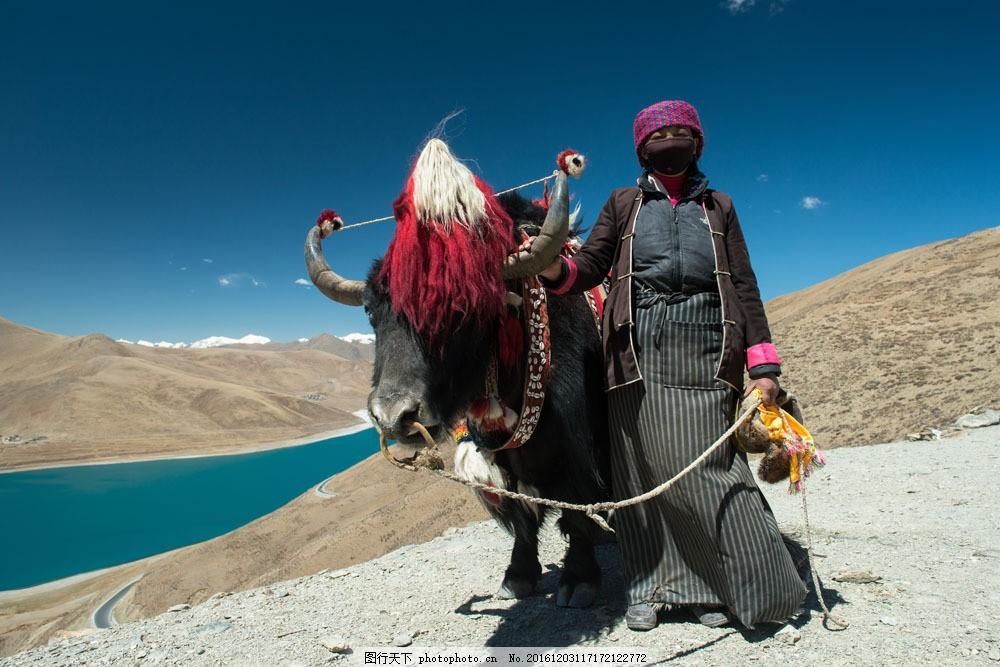藏民与牦牛图片素材 牦牛 藏民 西藏旅游 美丽风景 美丽景色 风景摄影