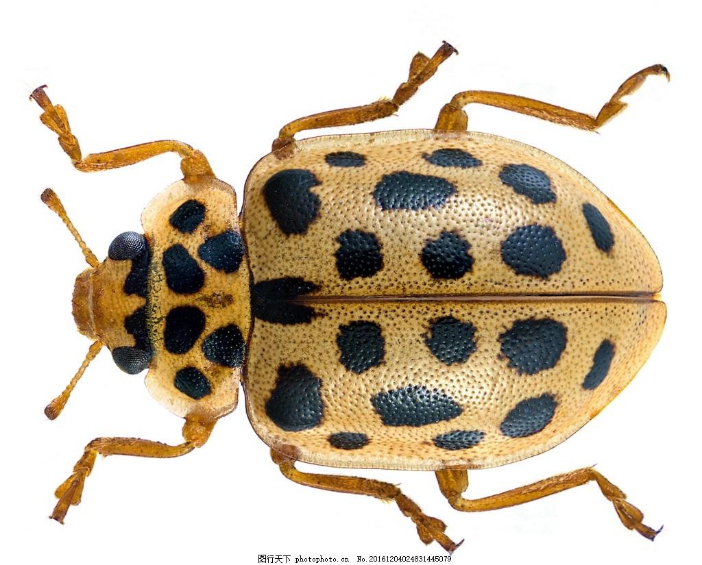 唯美 动物 可爱 昆虫 虫类