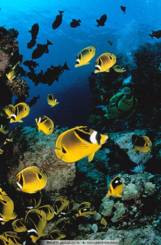 动物 野生 生态 鱼 鱼群 动物 摄影 生物世界 海洋生物 96dpi tif