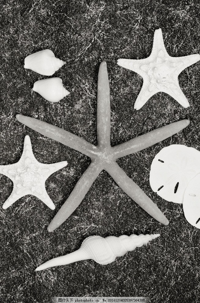 海螺海星 动物 沙滩 贝壳 摄影