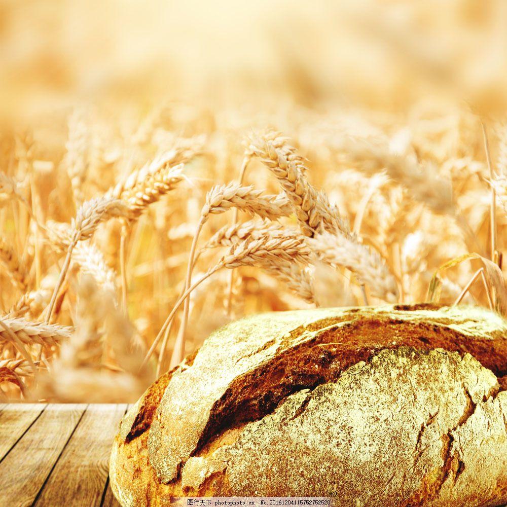 金黄黄的麦田图片素材 麦田 麦子 面包 食物 农作物 外国美食 餐饮