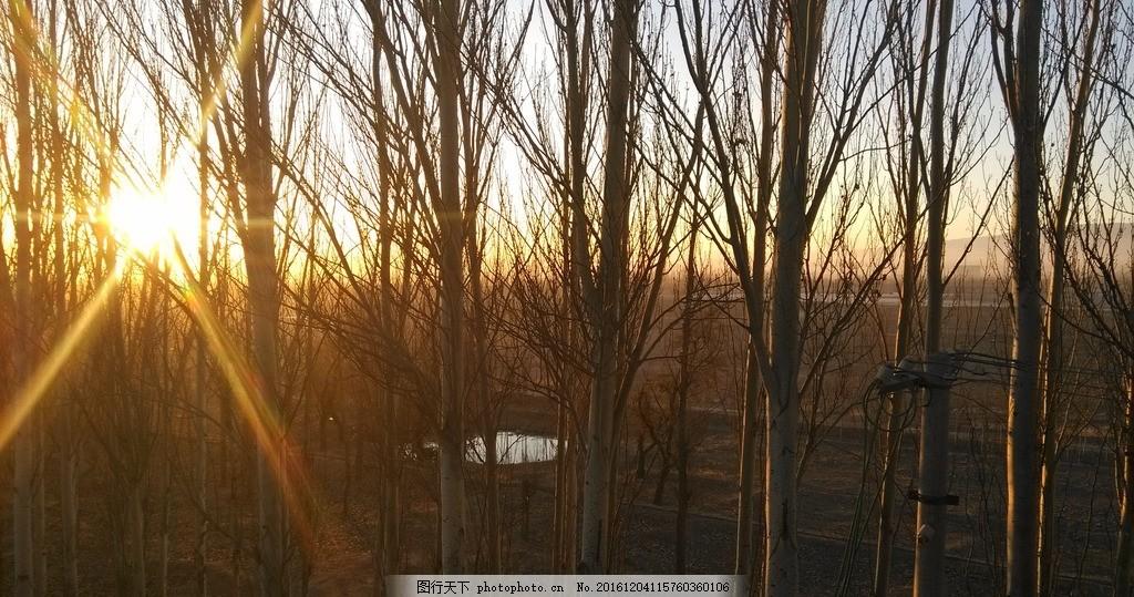 夕阳西下 秋天的小树林 夕阳 傍晚 秋意浓浓 黄昏 摄影 自然景观 自然