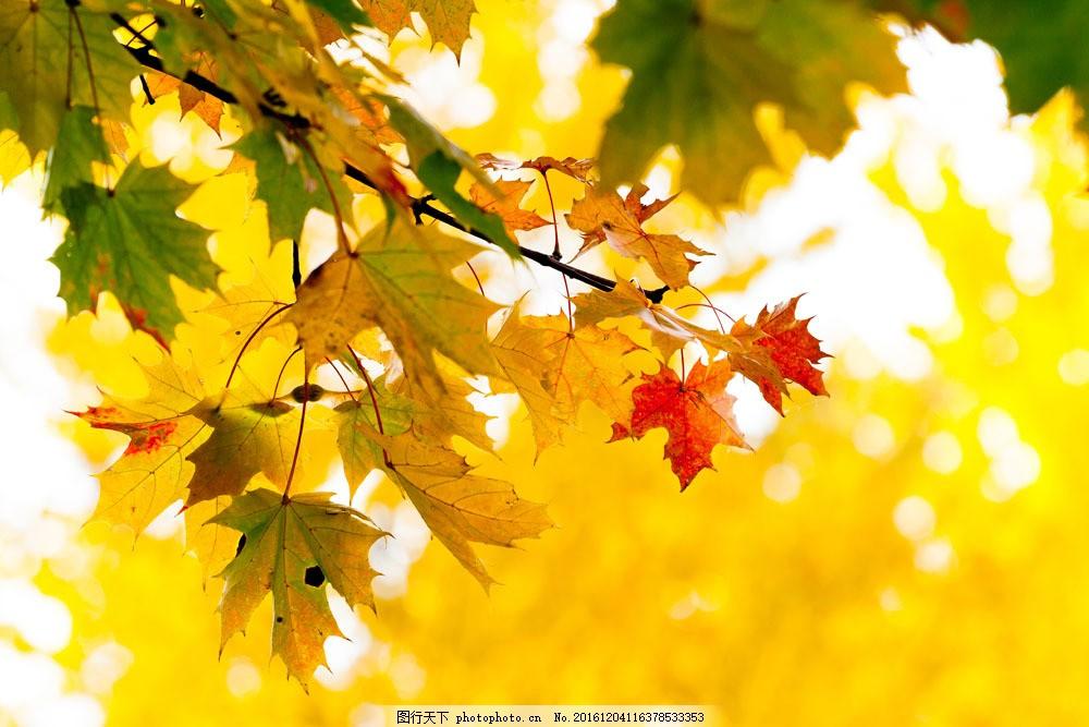 秋季风景图片