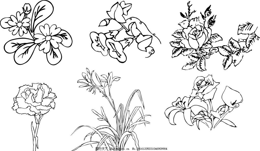 插画 线条画 花 插画 线条画 黑白线条画 花 插图 兰花 玫瑰 喇叭花