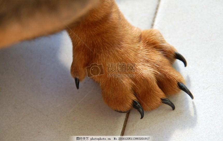 特写下的动物爪子