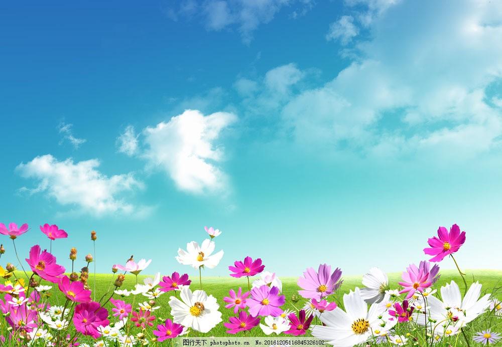 蓝天白云下的小花图片素材 蓝天白云 小花朵 植物花朵 花瓣 美丽鲜花