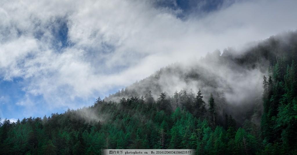 云雾森林风景