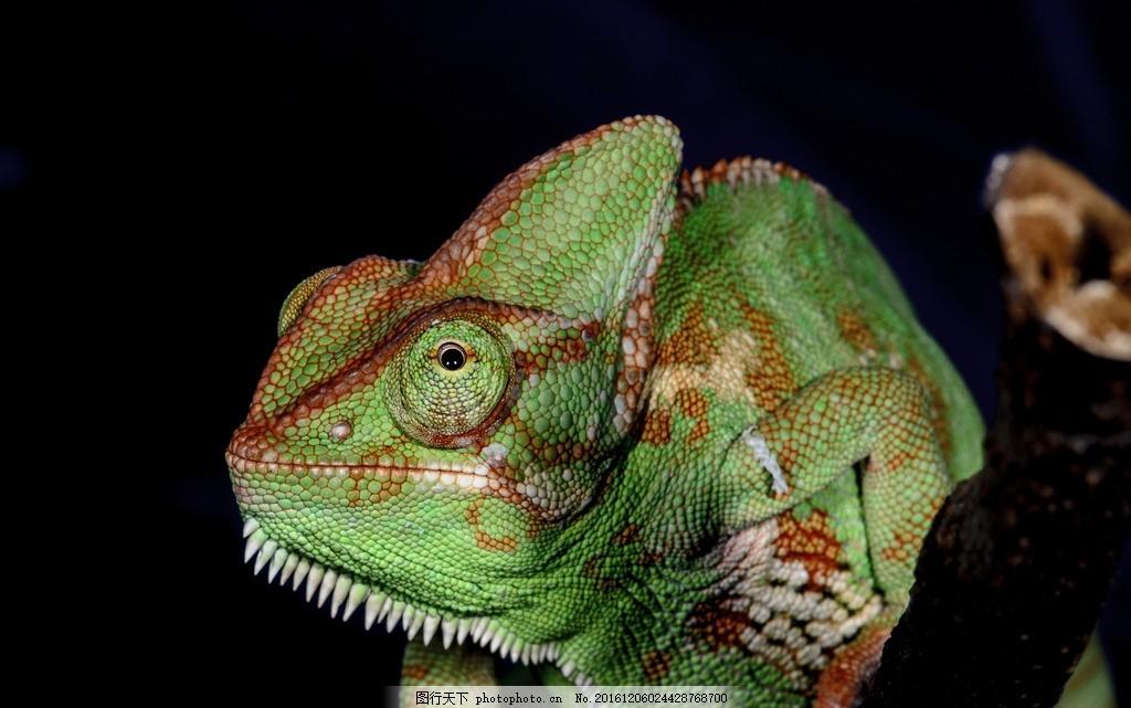 蜥蜴 户外 生态 动物 爬行动