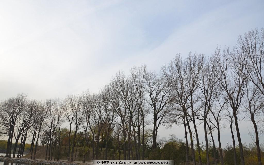 树 大叔 冬季的树木 一排树木 园林风景 摄影 生物世界 树木树叶 300