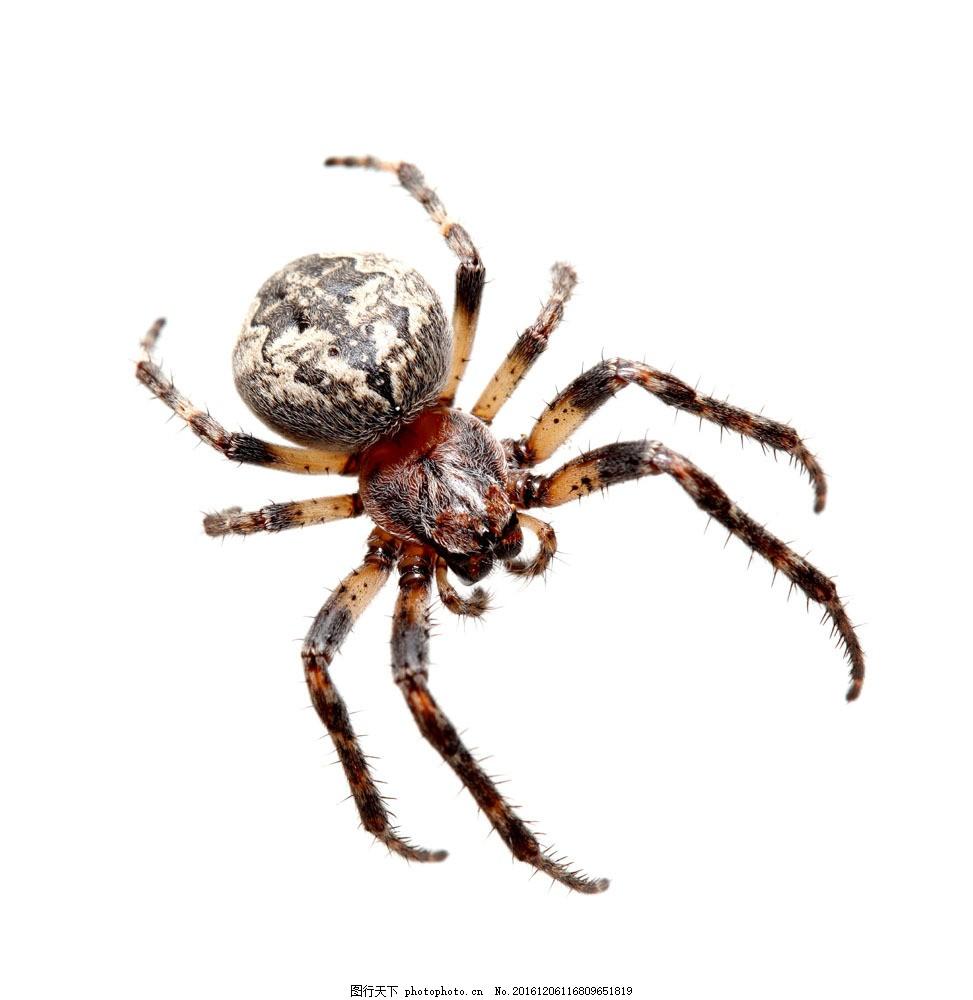 花蜘蛛摄影 花蜘蛛摄影图片素材 节肢动物 动物摄影 动物世界 动物