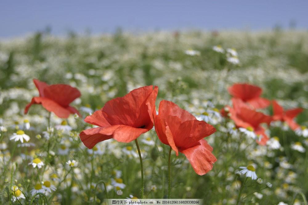 鲜花风景摄影图片