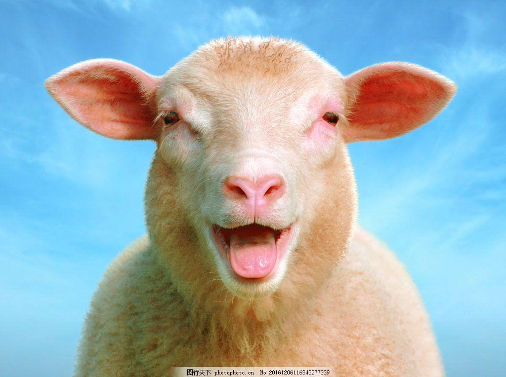 可爱的小羊图片素材 可爱的小羊 可爱小羊羔 羊 小羊羔 动物世界 动物