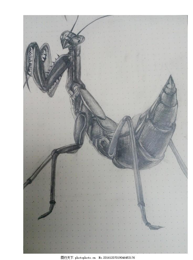 手绘 黑白螳螂 手绘 黑白画 螳螂 昆虫 素描 速写 简笔画 摄影 文化