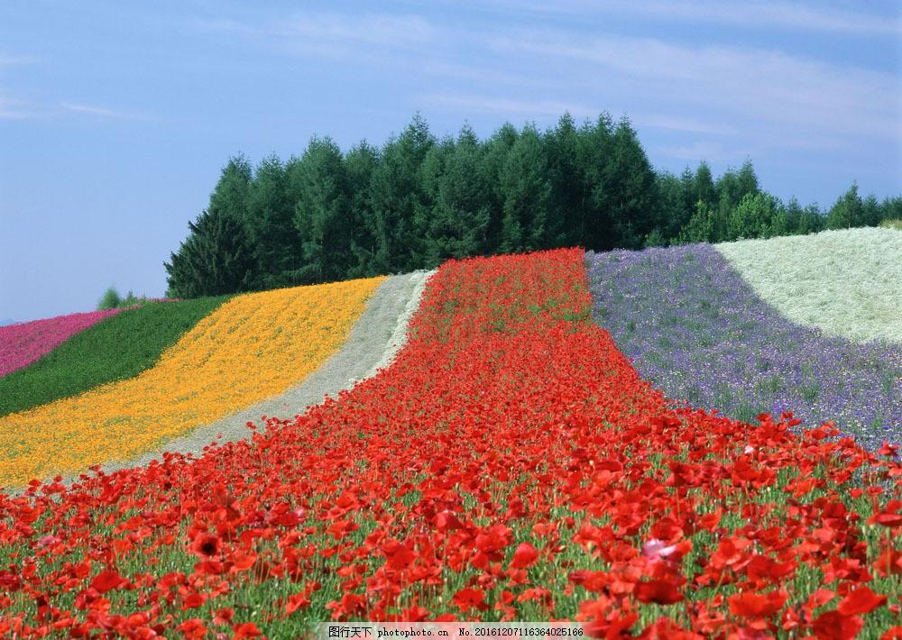 花园摄影图片素材 自然 风景 户外 美境 鲜花 天空 花园风光 一望无垠