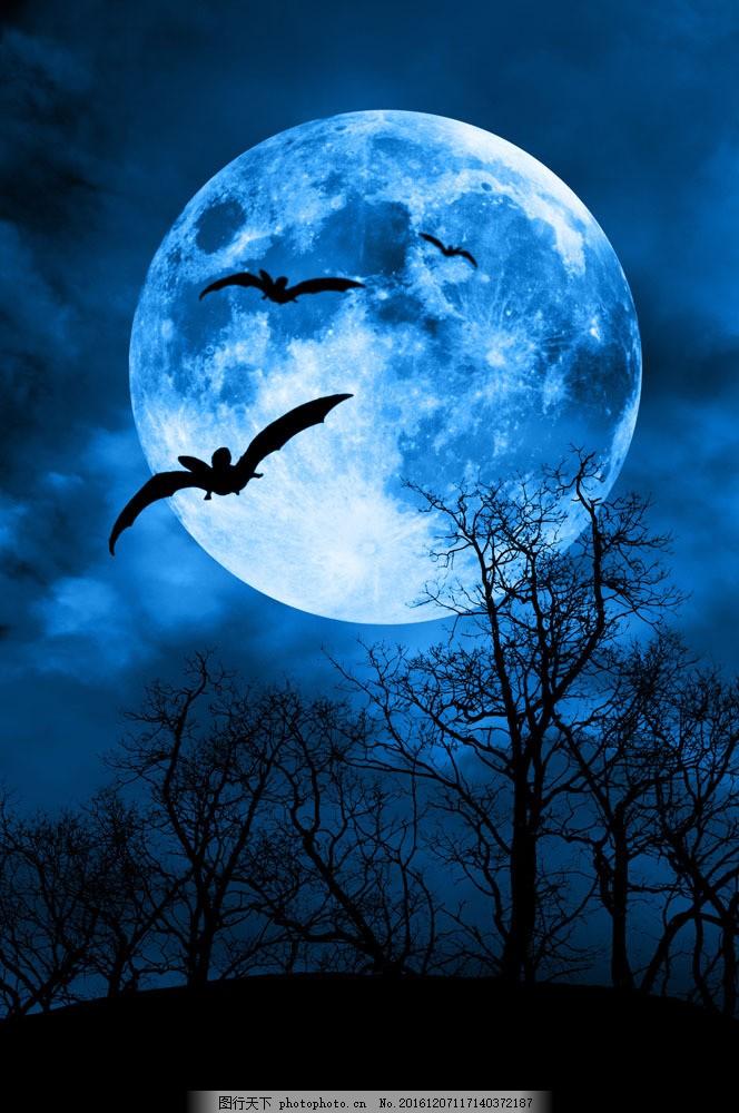 恐怖的夜晚 恐怖的夜晚图片素材 森林 圆月 万圣节背景 夜景 梦幻