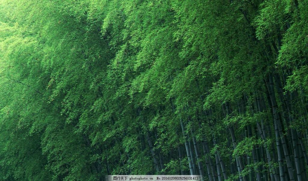 壁纸 风景 植物 桌面 1024_603