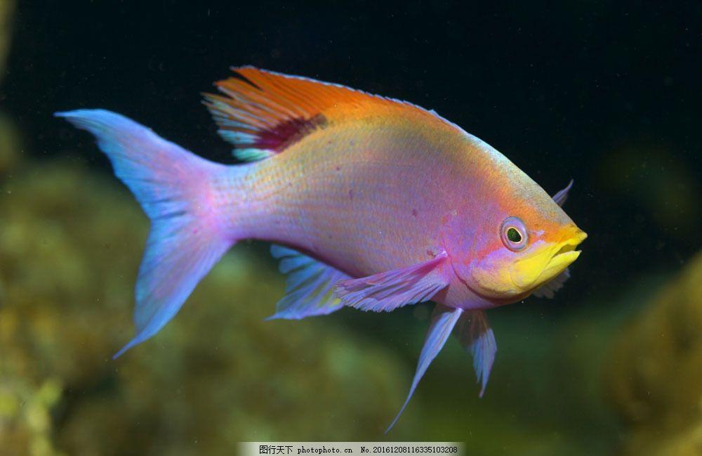 海底世界 海洋馆 海鱼 海水 深海 海底 水族 鱼类 鱼 摄影 大海图片