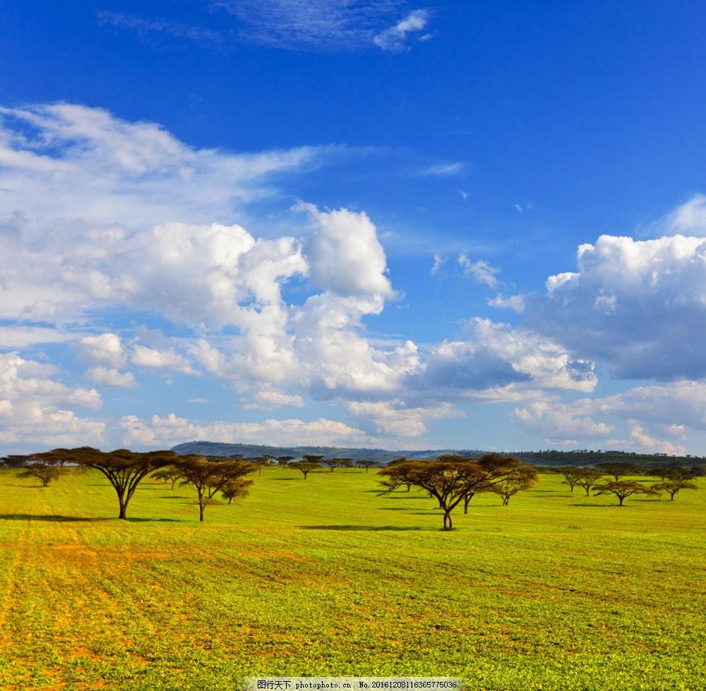 非洲草原风光图片,非洲草原风光图片素材 美丽风景