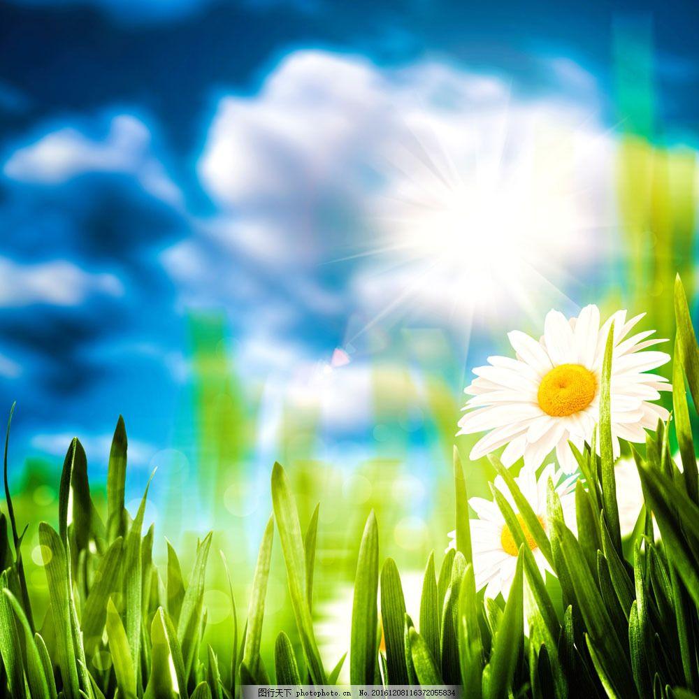 绿草和花朵图片素材 绿草 花朵 鲜花 阳光 云朵 自然 风景 山水风景