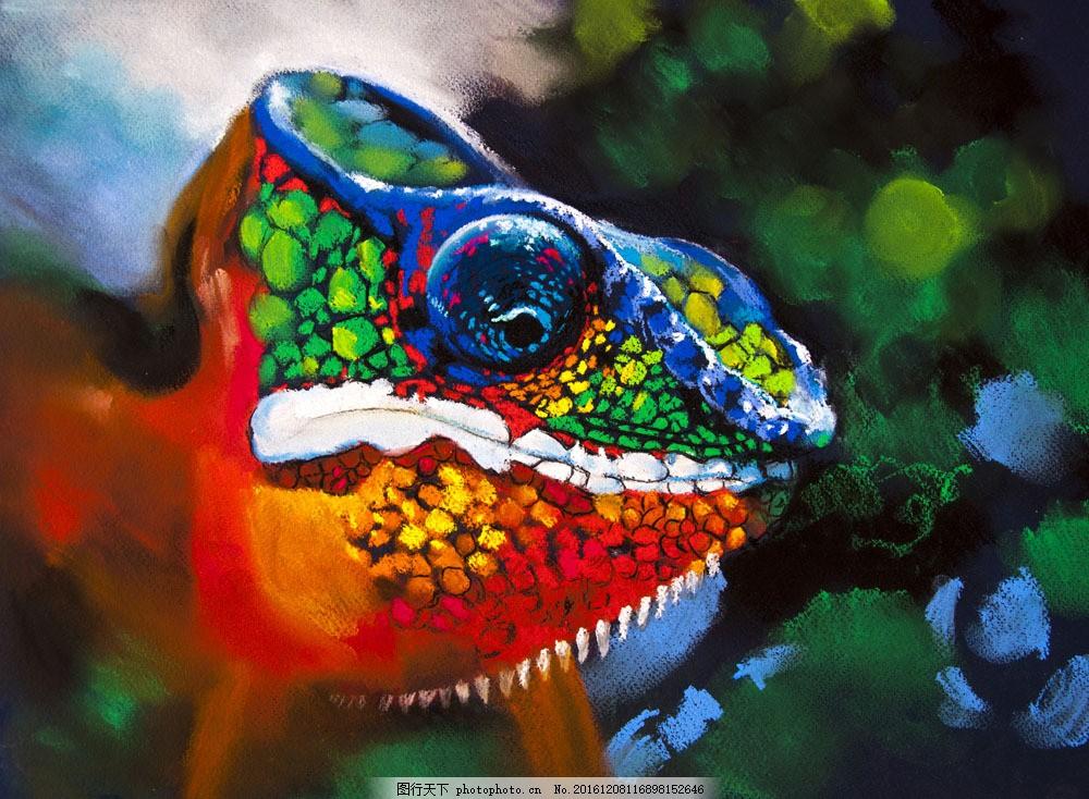 彩色变色龙 彩色变色龙图片素材 动物 野生动物 动物世界 动物摄影
