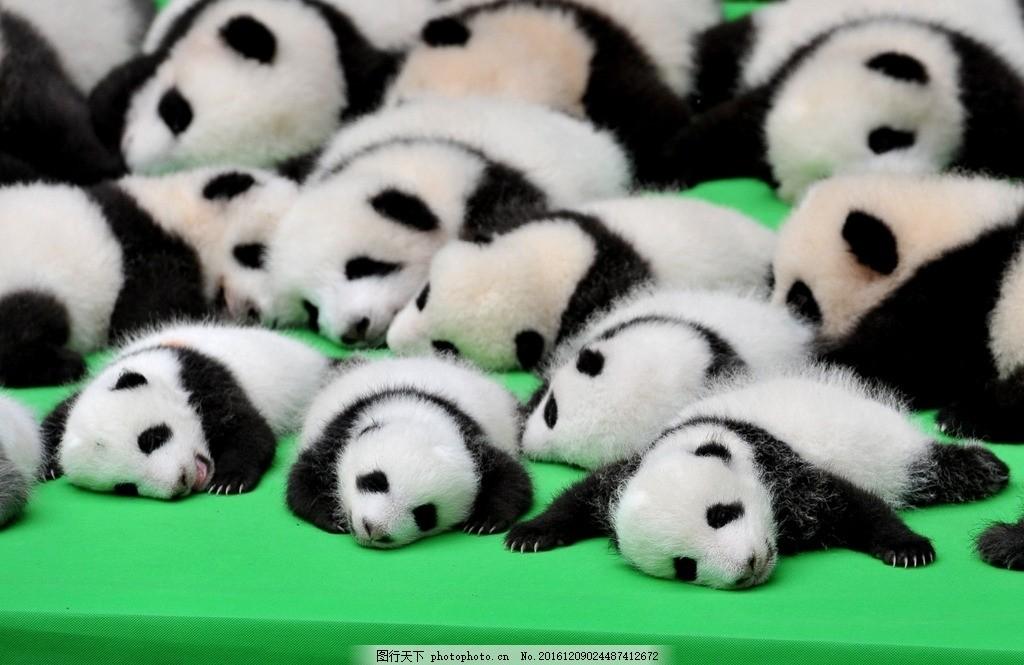 熊猫 四川熊猫基地 国宝 大熊猫 国家级保护 四川 功夫熊猫 可爱 萌