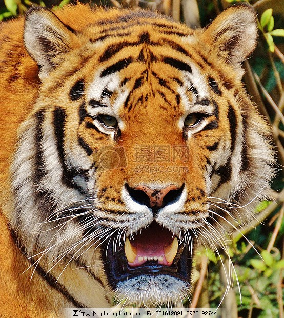 动物世界里的百兽之王
