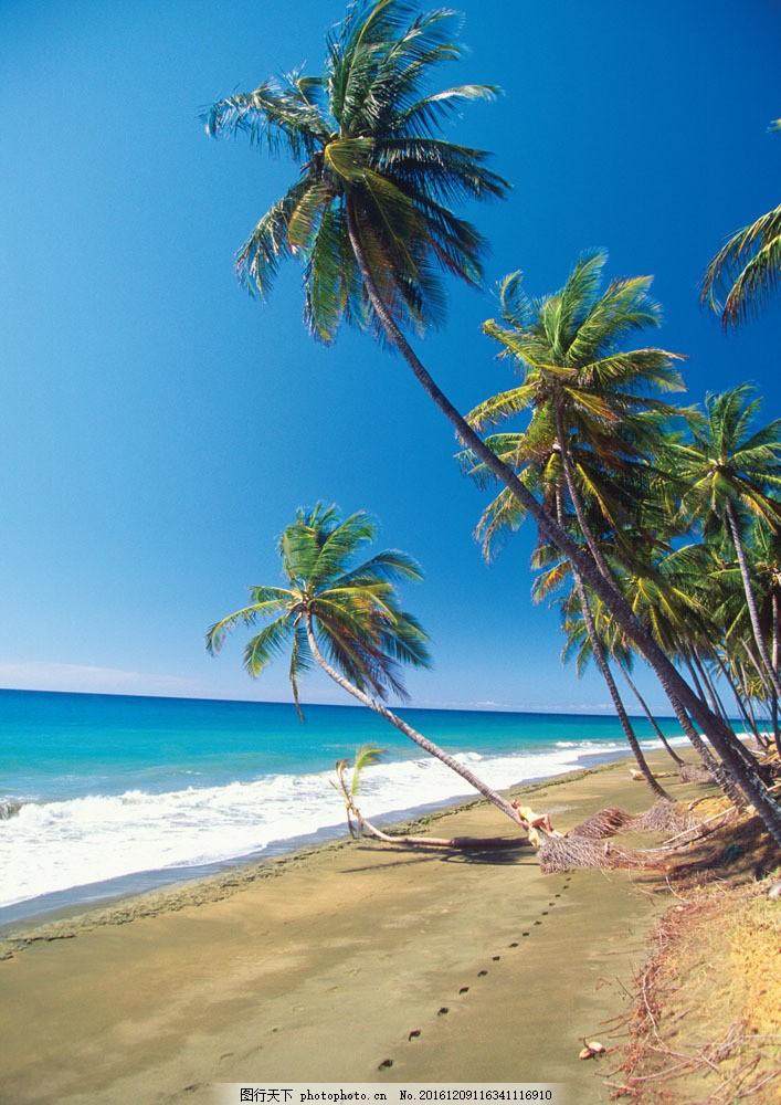 海岸风景 海岸风景图片素材 海洋沙滩风景照 椰子树 旅游摄影 风光