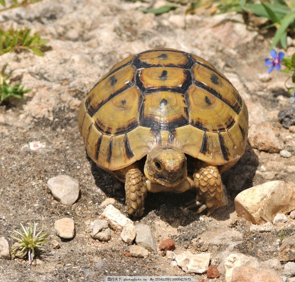 乌龟 乌龟图片素材 海龟 爬行动物 动物世界 动物摄影 陆地动物