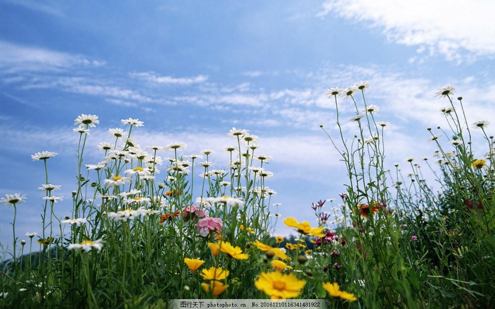 蓝天下的花丛图片素材 蓝天 天空 白云 花丛 花朵 植物 山水风景 风景