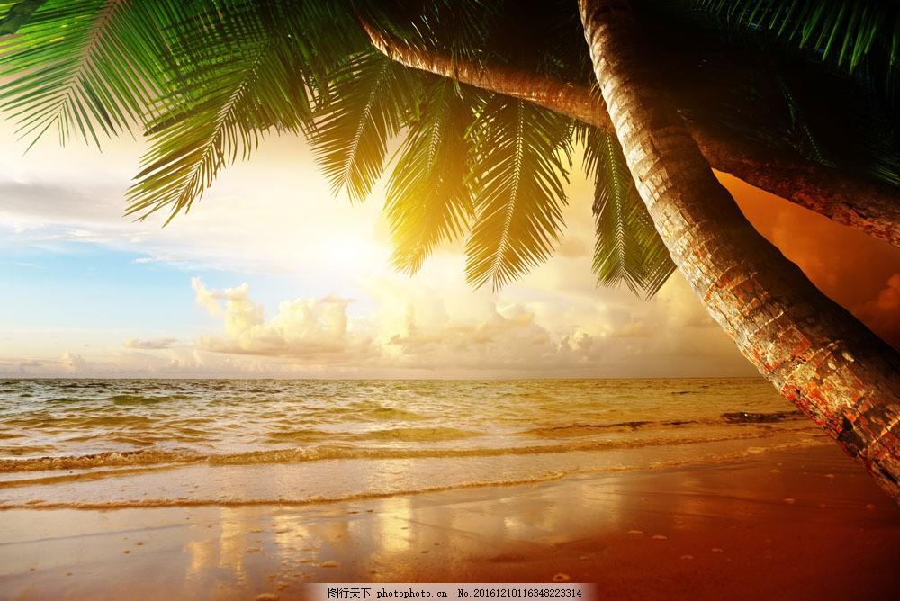 阳光沙滩和椰树图片素材 阳光 沙滩 椰树 大海 沙滩 大海图片 风景