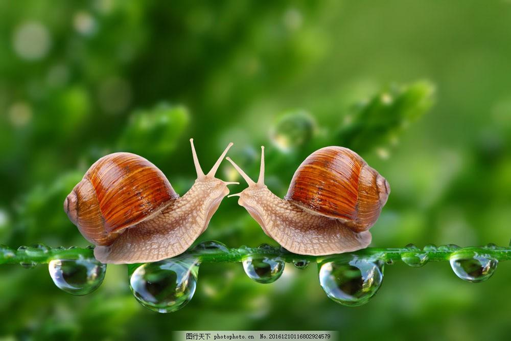 蜗牛 蜗牛图片素材 露水 露珠 水滴 水珠 梦幻背景 春天 绿色清新