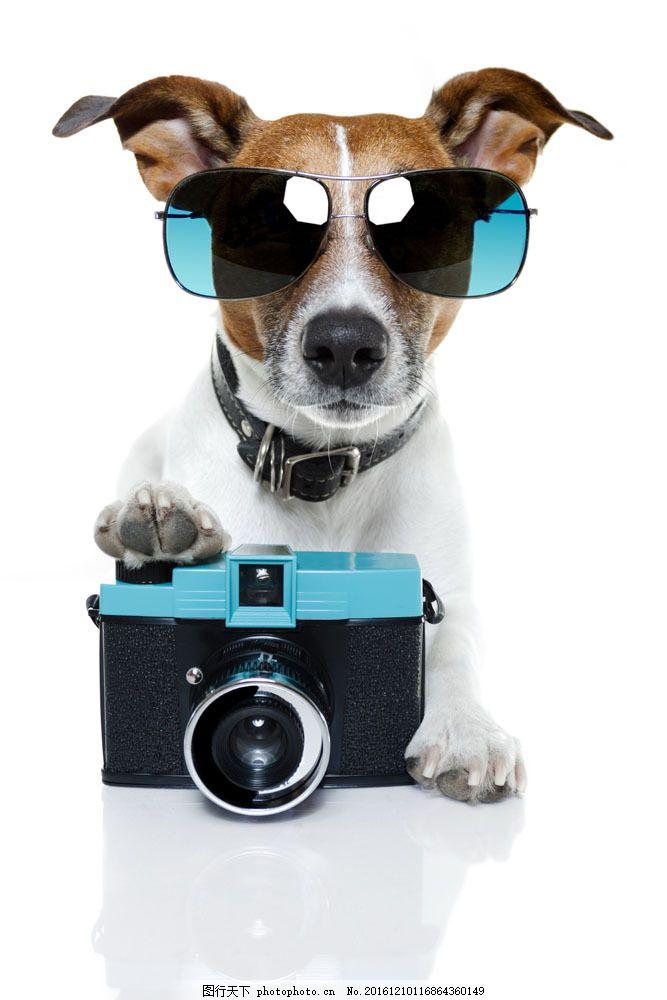 照相机 戴墨镜的小狗 可爱小狗 宠物狗 动物世界 狗狗图片 生物世界